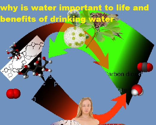 water important to life